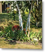 Red Mums And Birch Trees Metal Print