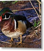 Red Nose Duck Metal Print