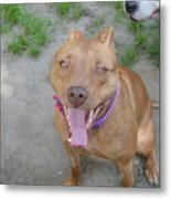 Red Nose Pitty Metal Print