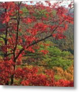 Red Oak And Millers River Valley Metal Print