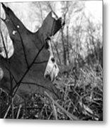 Red Oak Leaf Four Metal Print