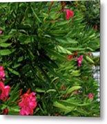 Red Oleander Arbor Metal Print