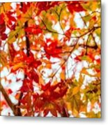 Red On A Tree Metal Print