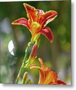 Red Orange Day Lilies I Metal Print
