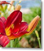 Red Orange Lily By The Lake Metal Print