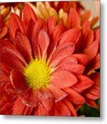 Red Orange Shasta Metal Print