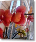 Red Orchid Flowers 01 Metal Print