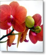 Red Orchid Flowers 02 Metal Print
