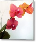 Red Pink Golden Orchid Flowers 03 Metal Print