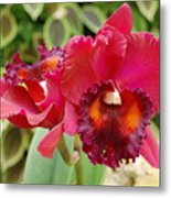 Red Orchid Metal Print