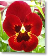 Red Pansy Metal Print
