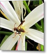 Red Paper Wasp And Spider Lily 000 Metal Print