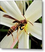 Red Paper Wasp And Spider Lily 001 Metal Print