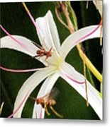 Red Paper Wasps And Spider Lily Metal Print