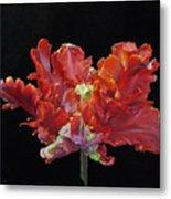 Red Parrot Tulip - Oils Metal Print