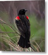 Red Patches Metal Print