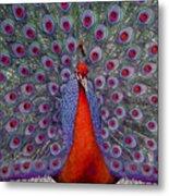 Red Peacock Metal Print