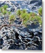Red Pine Metal Print
