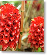 Red Pineapple Ginger Plant Metal Print