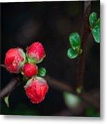 Red Plum Flowers In Rain Metal Print
