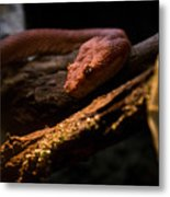 Red Poisonous Snake Metal Print