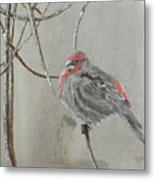 Red Poll In Winter Metal Print
