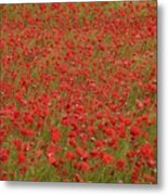 Red Poppies 2 Metal Print