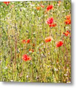 Red Poppies And Wild Flowers Metal Print