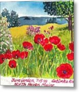 Red Poppies Coastal Maine Island June Garden North Haven  Metal Print
