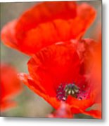 Red Poppy For Remembrance Metal Print