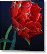 Red Princess Tulip On Blue Metal Print