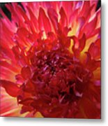 Red Purple Dahlia Flower Summer Dahlia Garden Baslee Troutman Metal Print
