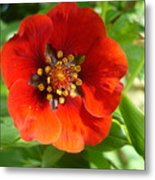 Red Red Bloom Metal Print