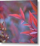 Red Red Leaves Metal Print