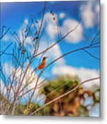 Red Red Robin Metal Print