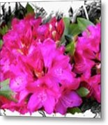Red Rhododendron Flowers Metal Print