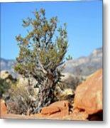 Red Rock Canyon Nv 3 Metal Print