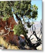 Red Rock Canyon Nv 5 Metal Print