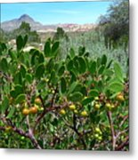 Red Rock Canyon Wild Flowers 20150525-06 Metal Print