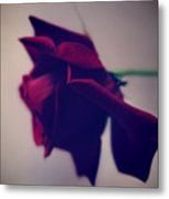 Red Rose Abstract 1 Metal Print