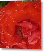 Red Rose After Rain Metal Print