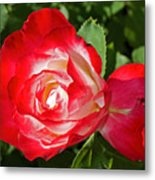 Red Rose And A Sidecar At Pilgrim Place In Claremont-california Metal Print