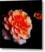 Red Rose And Bud Metal Print by Gaynor Perkins