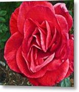 Red Rose F135 Metal Print