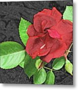 Red Rose For My Lady Metal Print