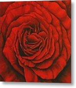Red Rose II Metal Print