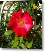 Red Rose In Summer Metal Print