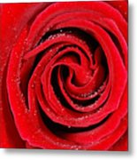 Red Rose Metal Print