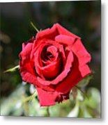 Red Rose Landscape Metal Print