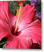Red Rose Of Sharon  Metal Print